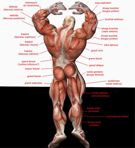 Anatomie dos